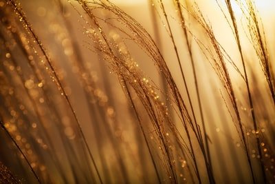 selective focus photography of brown grass at daytime