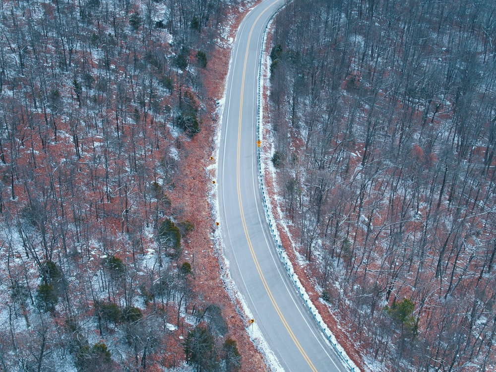 aerial photography of grey concrete road surrounded by bare trees at daytime