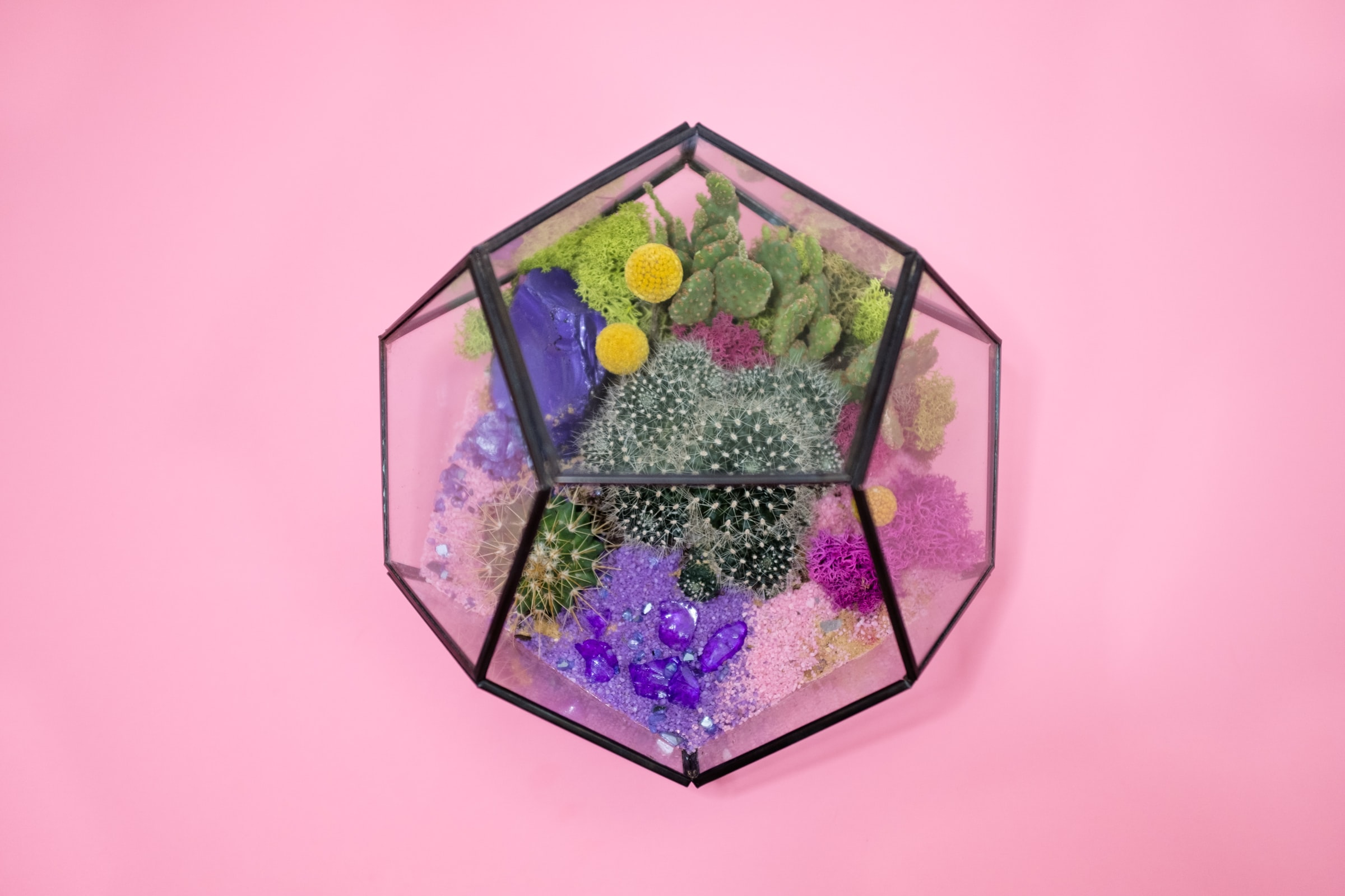clear glass terrarium on pink surface