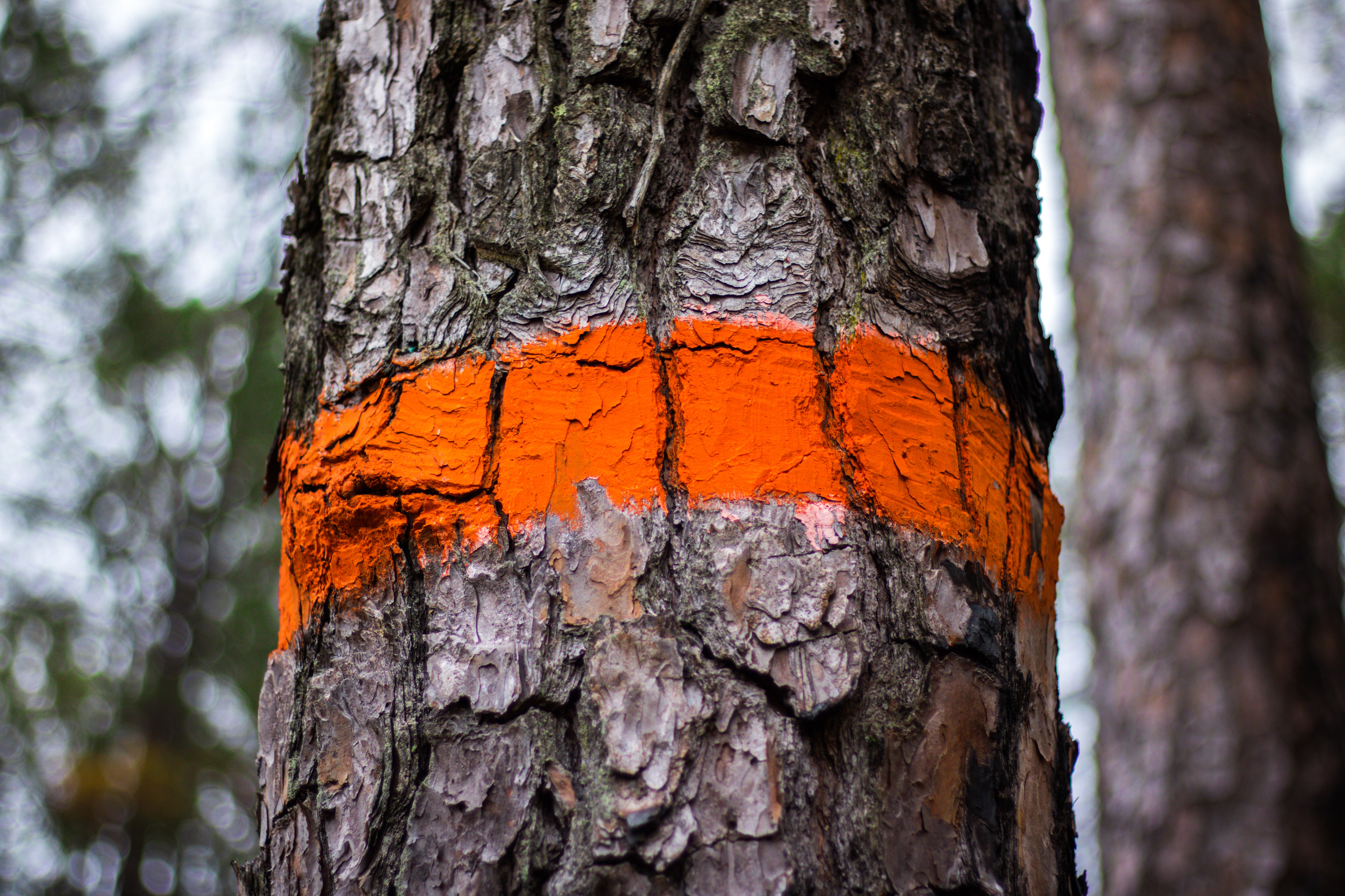 tree trunk with orange paint