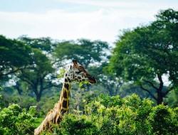 Murchison Falls National Park - Fort Portal - Kibale Forrest