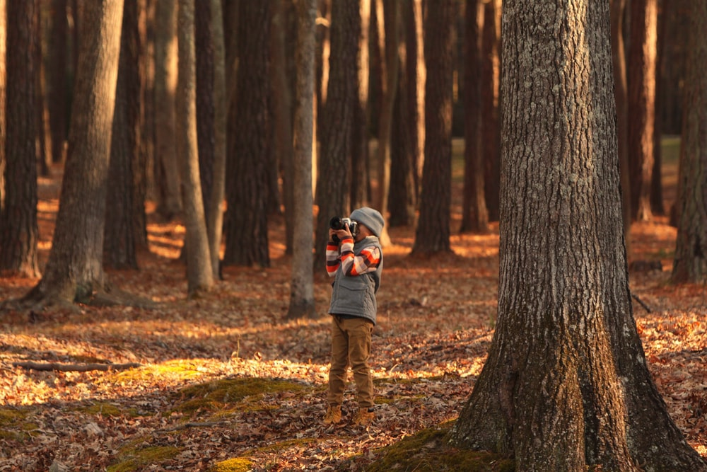person holding camera in forest
