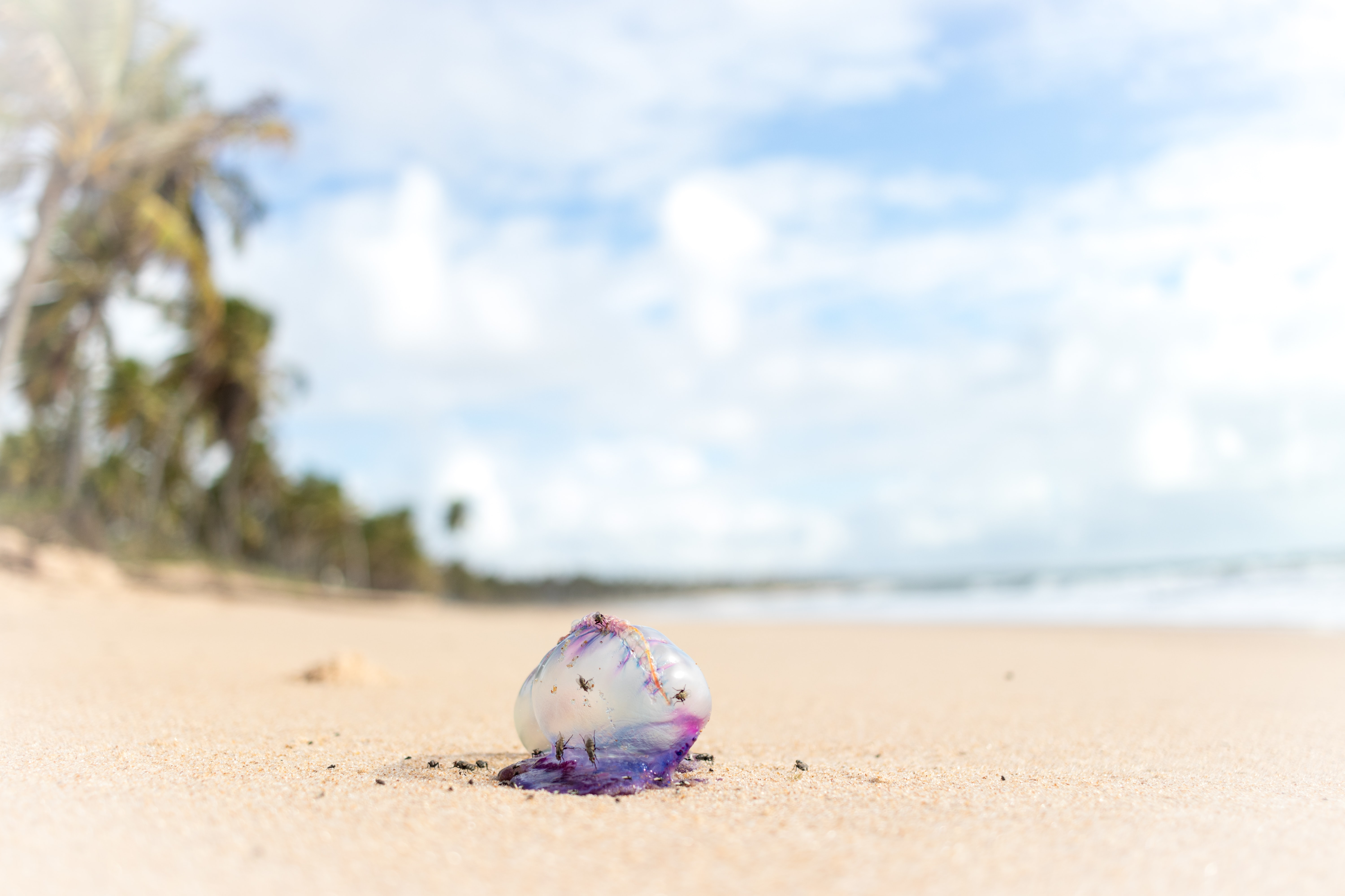 selective focus photography of clear bag on seashore