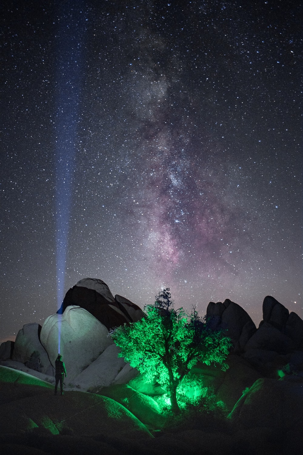 person with flashlight near lighted green tree on mountain under starry night
