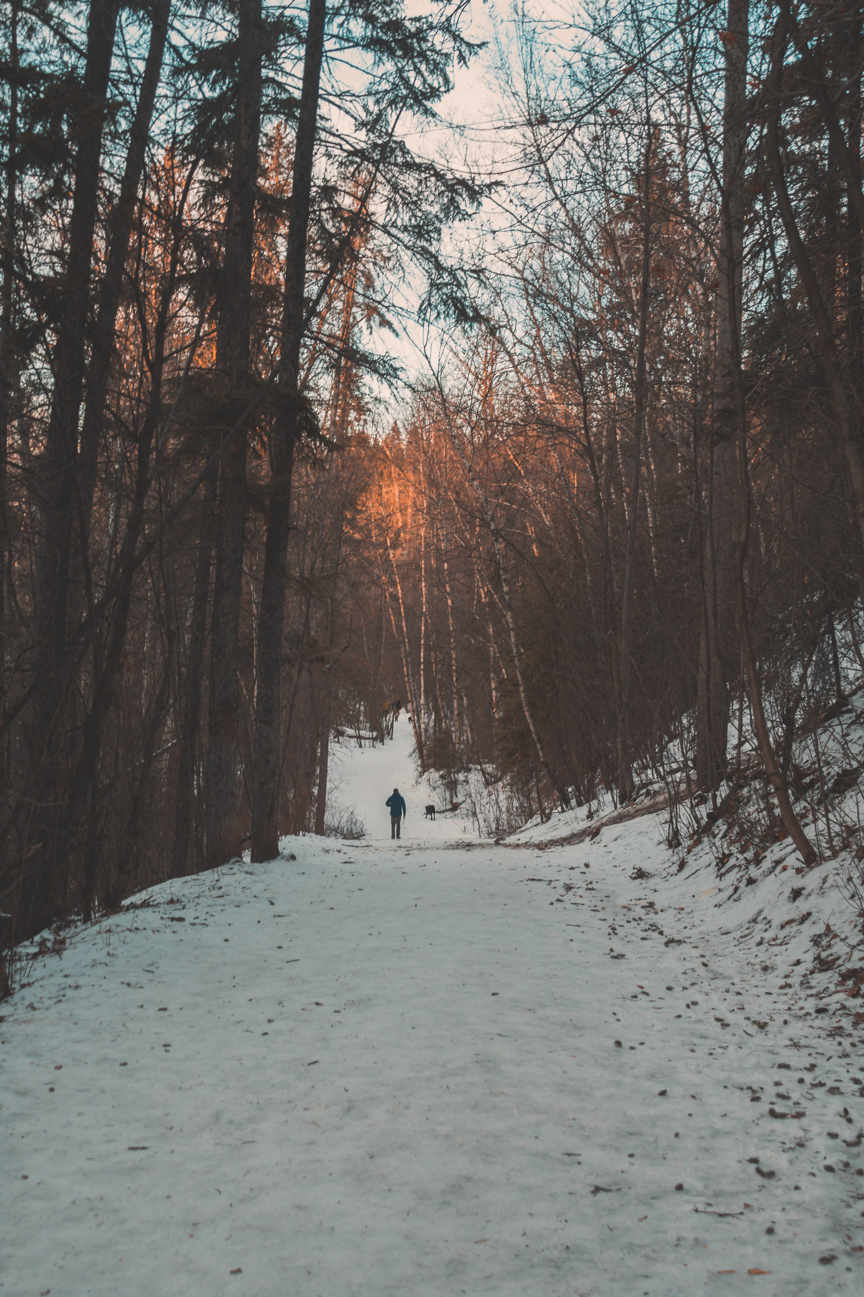person walking in between tall trees during daytime