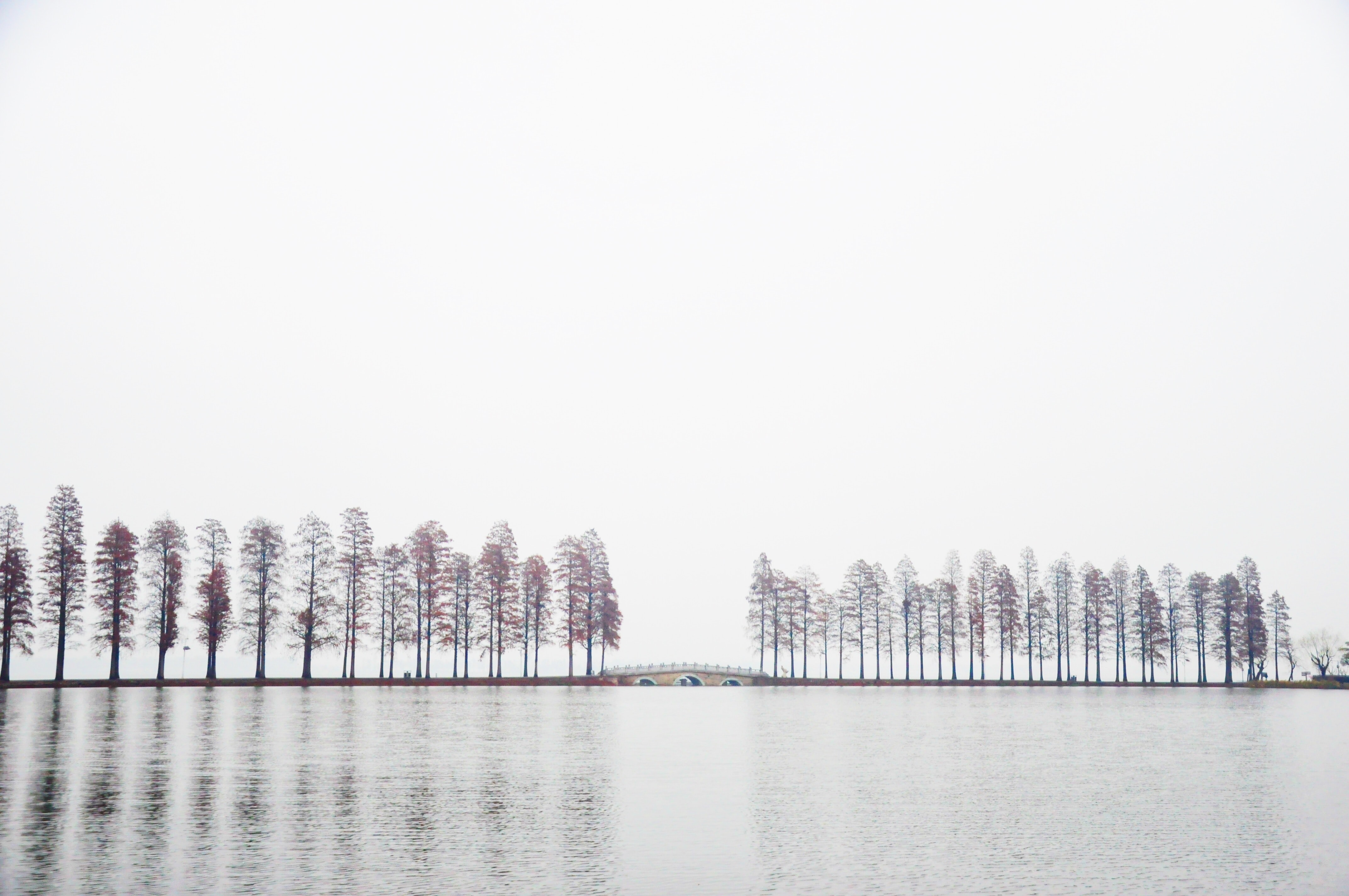 trees on shore during grey sky