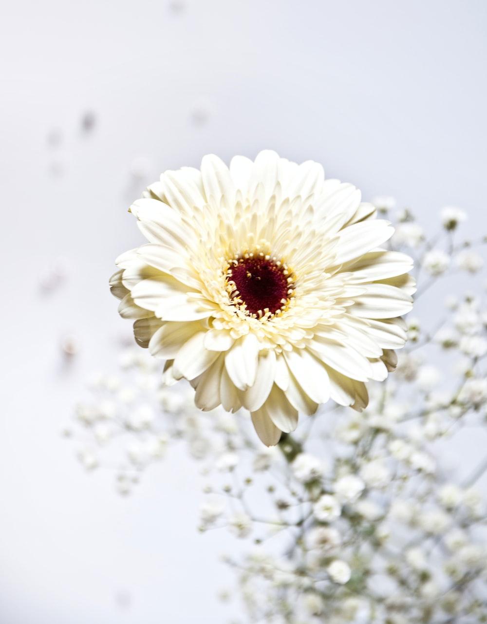 White flower photo by magda fou magdafou on unsplash shallow focus photo of white flower izmirmasajfo