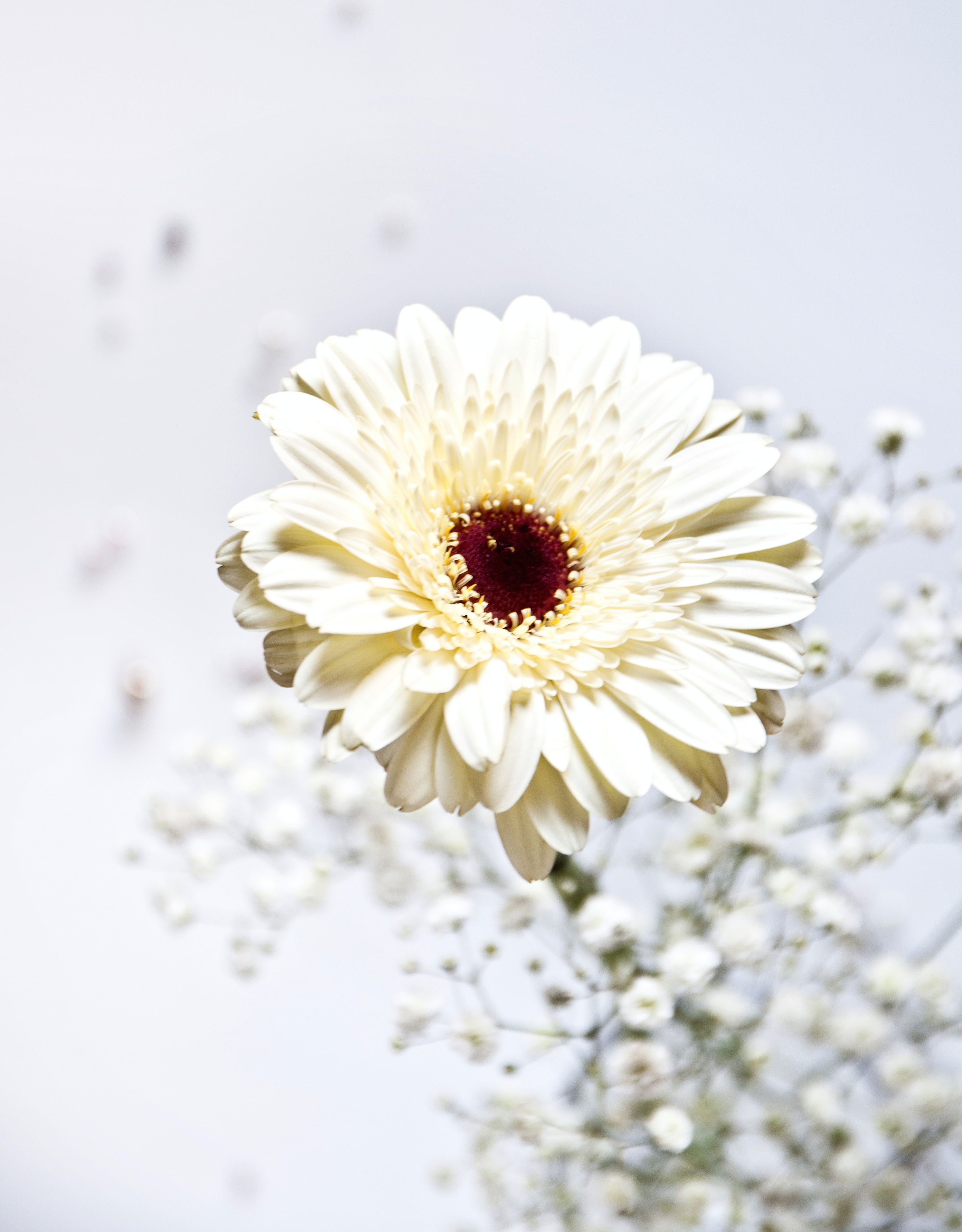shallow focus photo of white flower