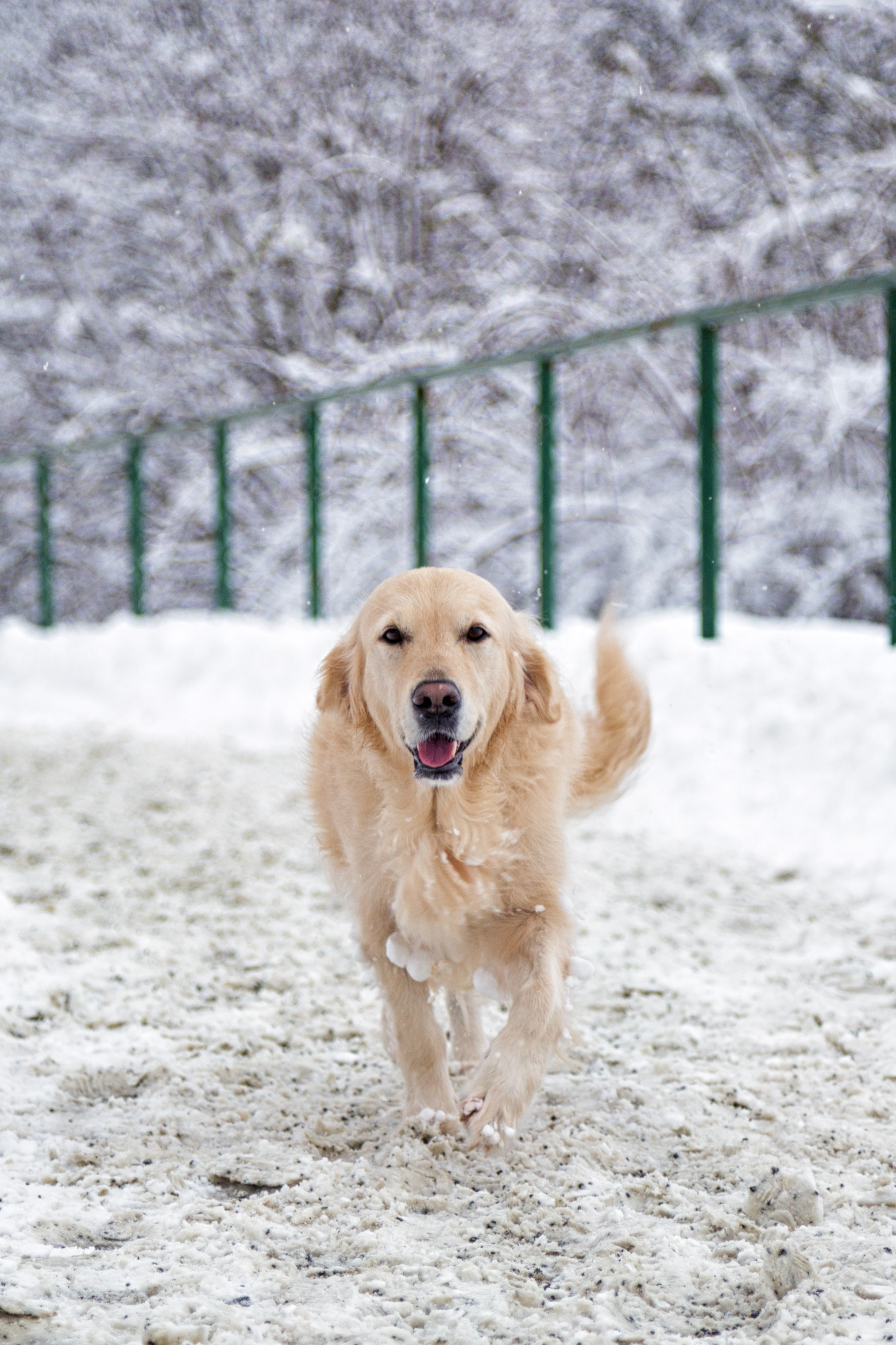 selective focus photography of dog on snow