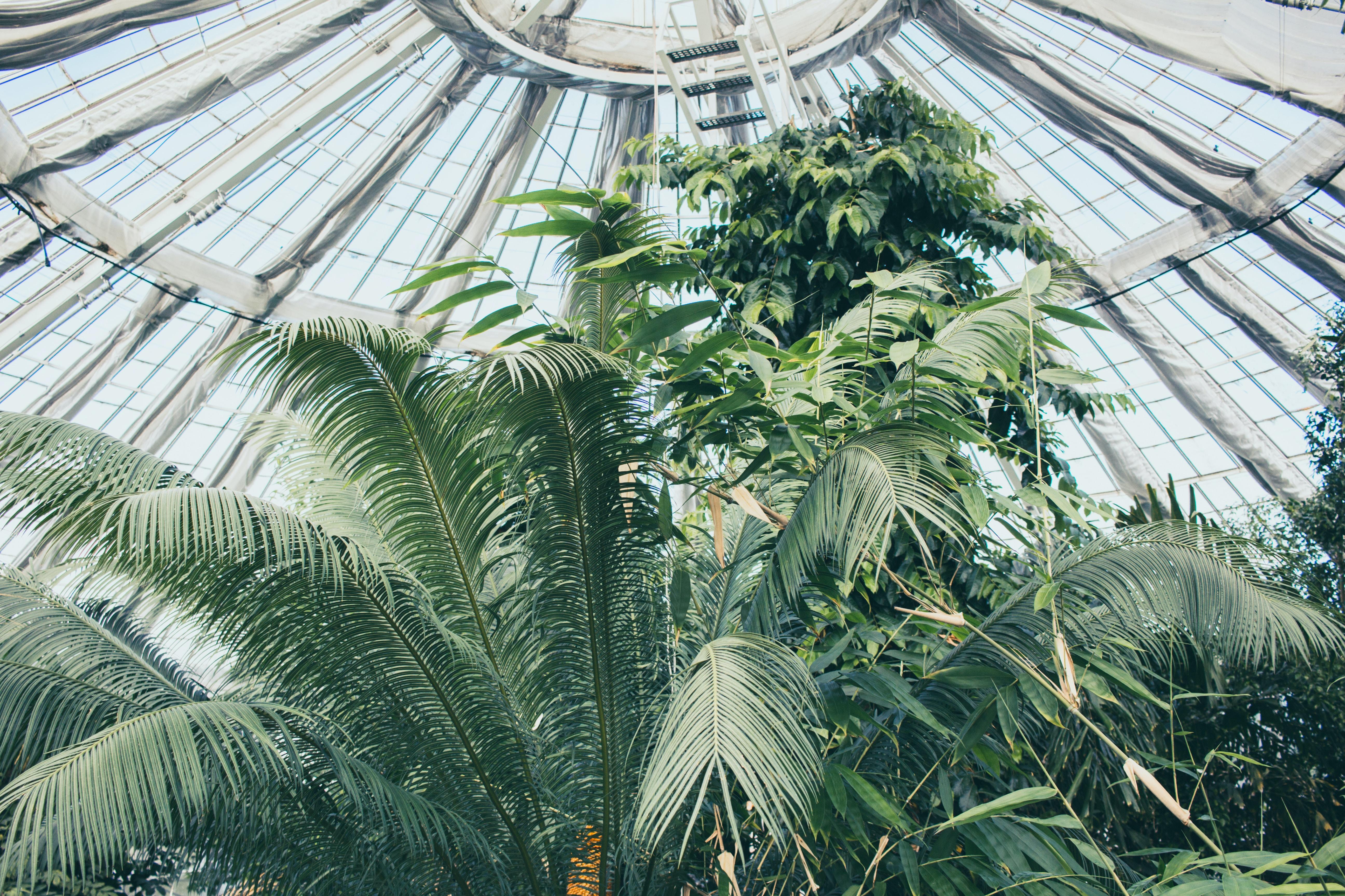 low-angle photo of palm tree