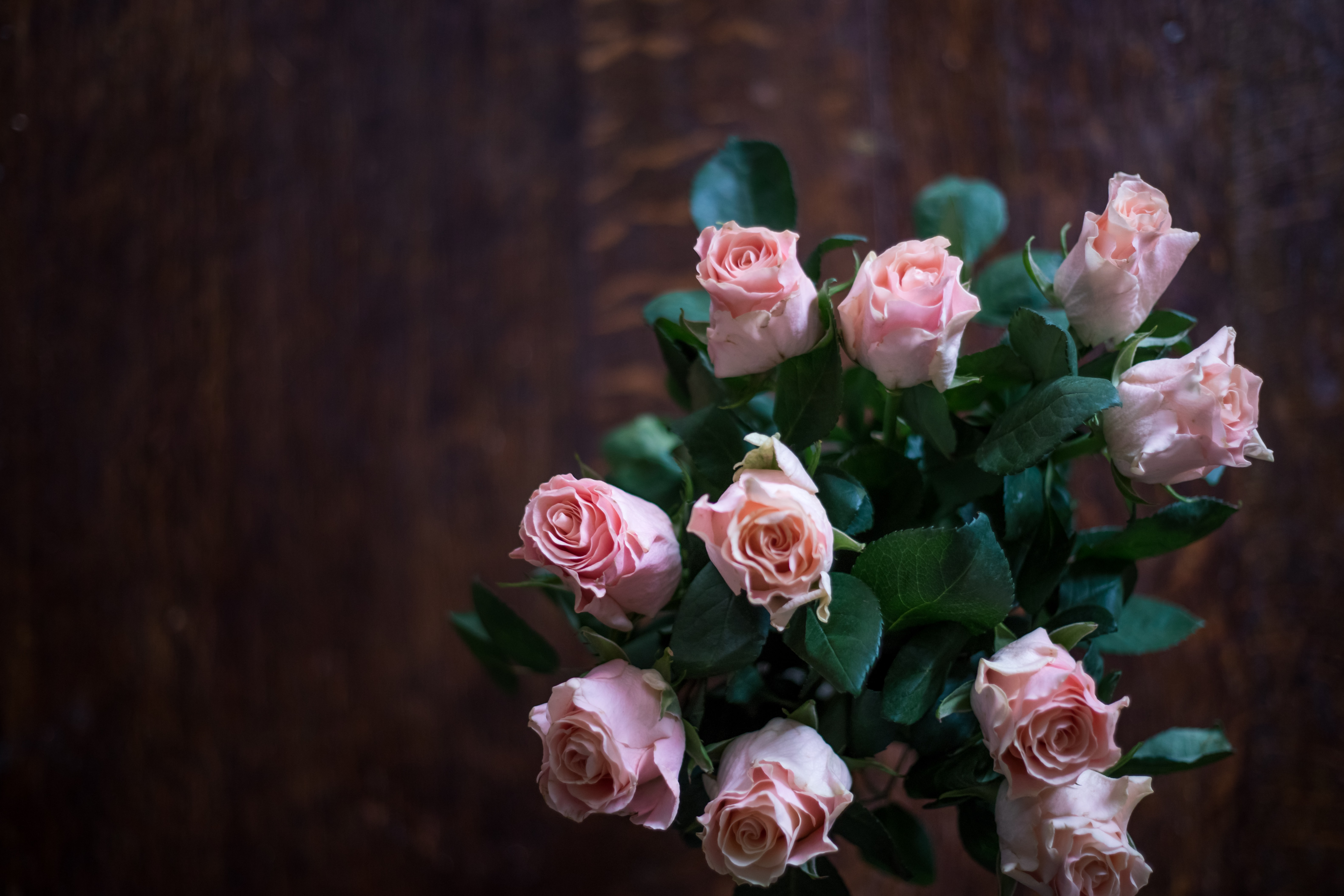 high angle photography of pink rose bouquet