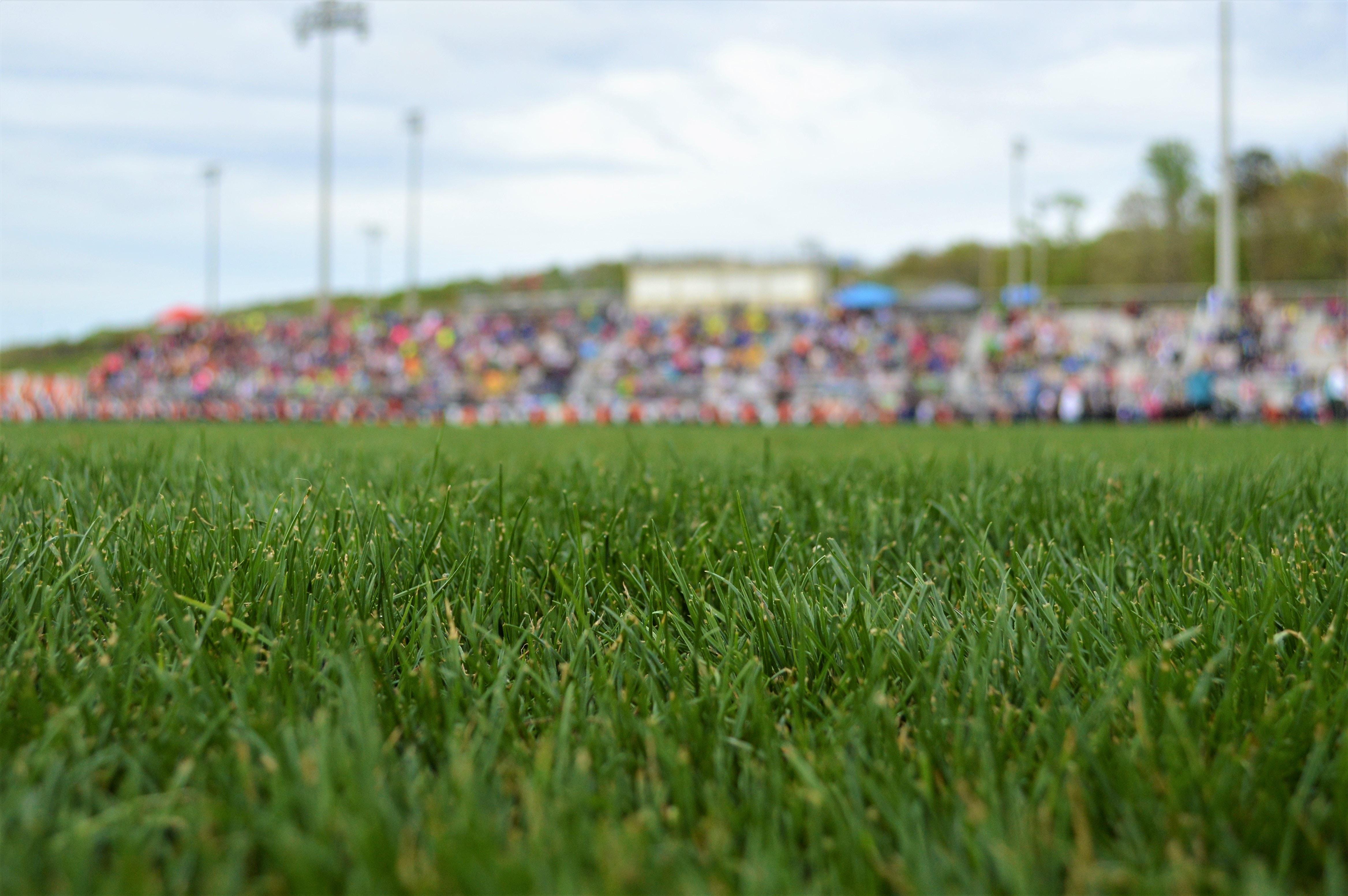 close-up photo of green grass field