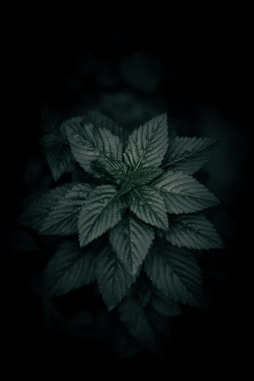 Black Wallpapers Free HD Download [12+ HQ]   Unsplash