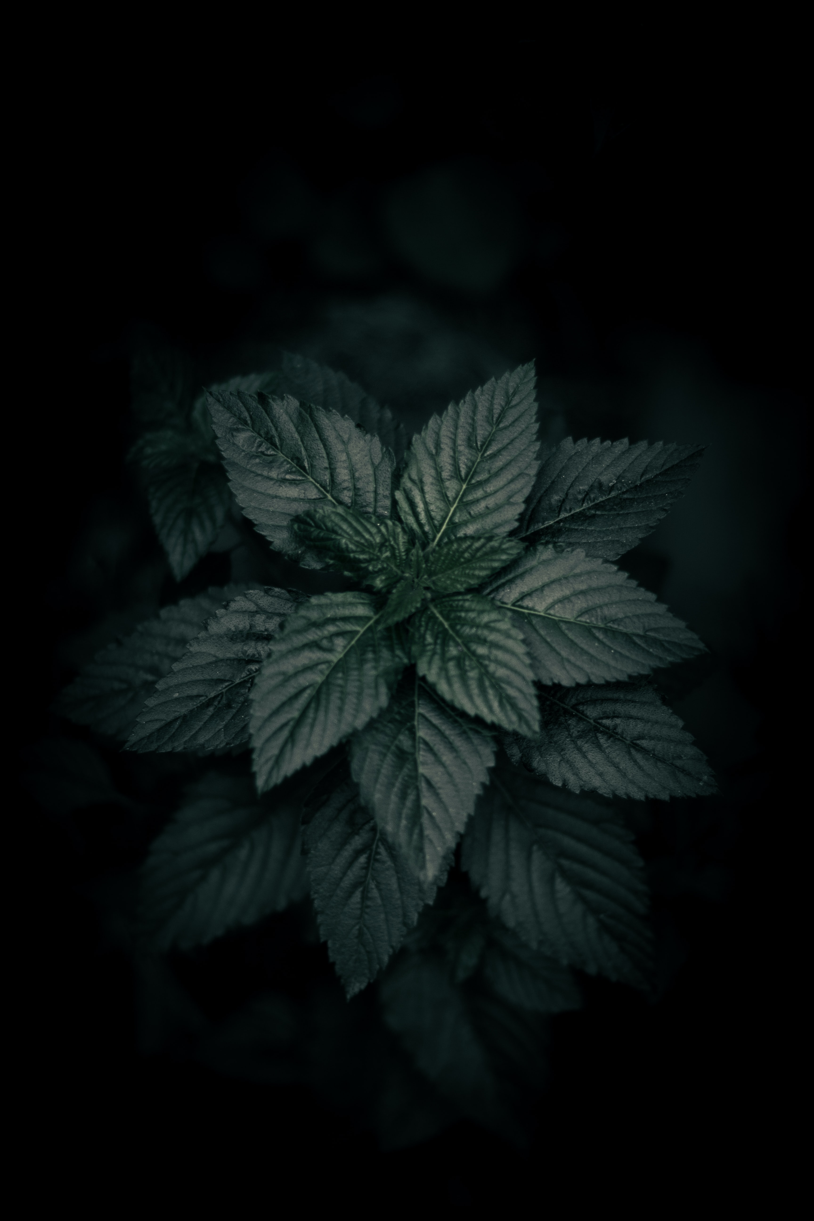 Black Background Pictures Hq Download Free Images Stock Photos