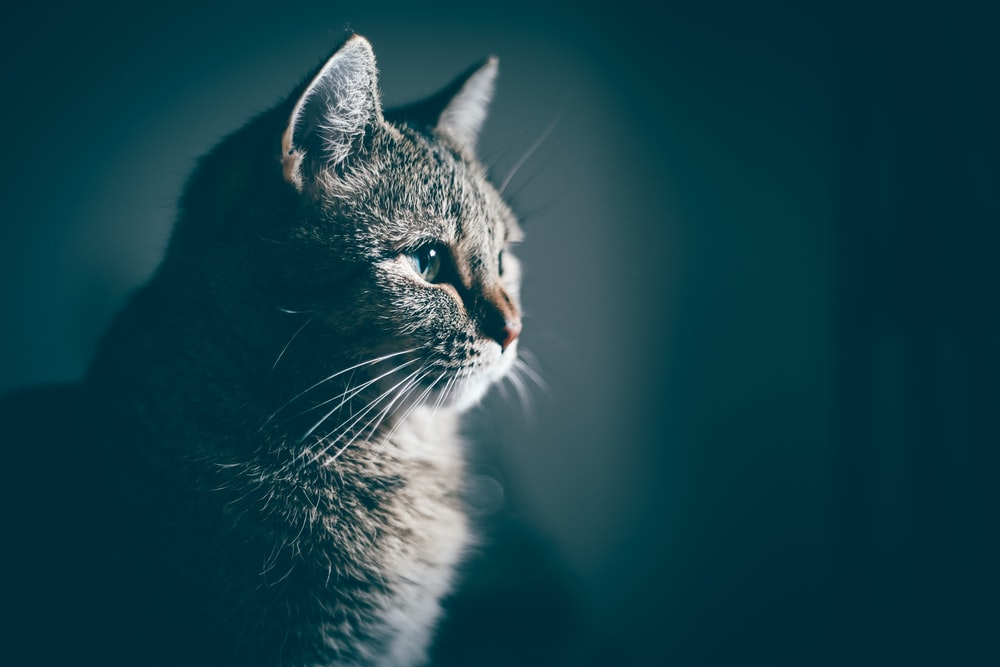 20 Cat Pictures Images Hd Download Free Images Stock Photos On Unsplash