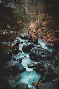 gray rocks in river between trees