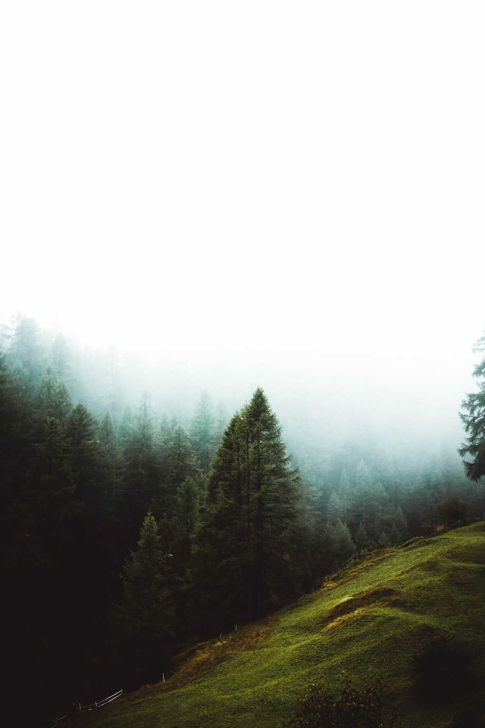 aerial photography of tall pine trees under thick fogs
