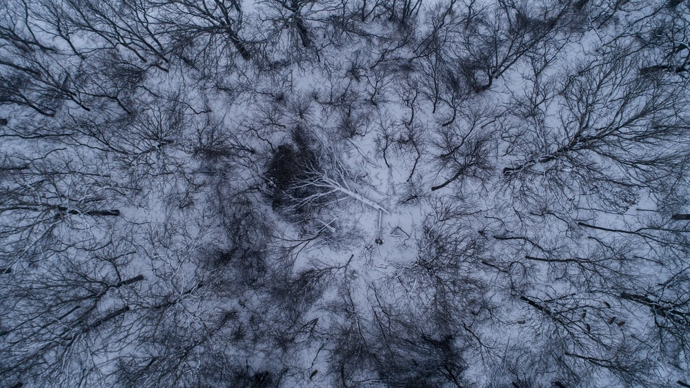 worm's eyeview of bare trees