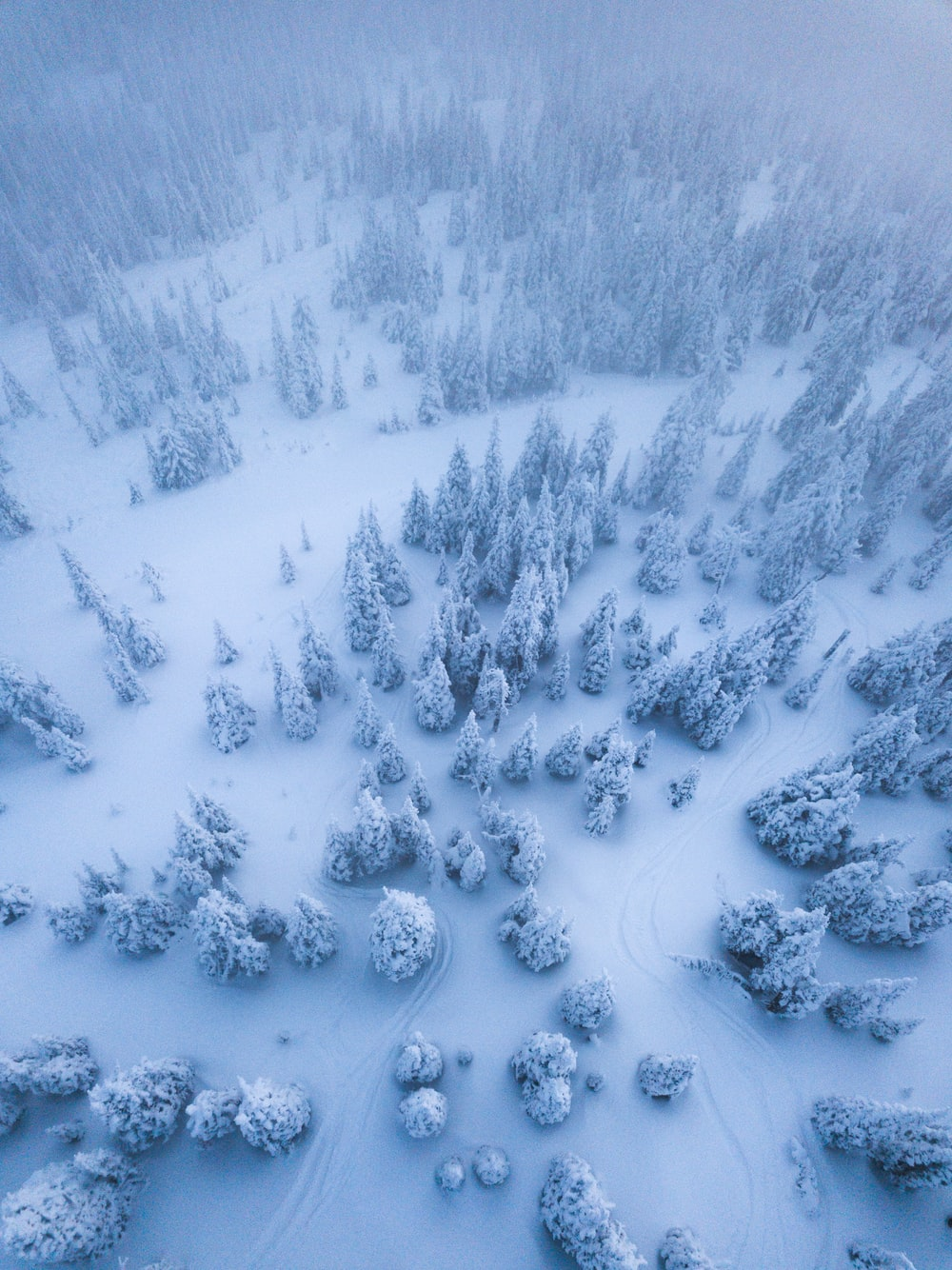 aerial view of trees covered with snow