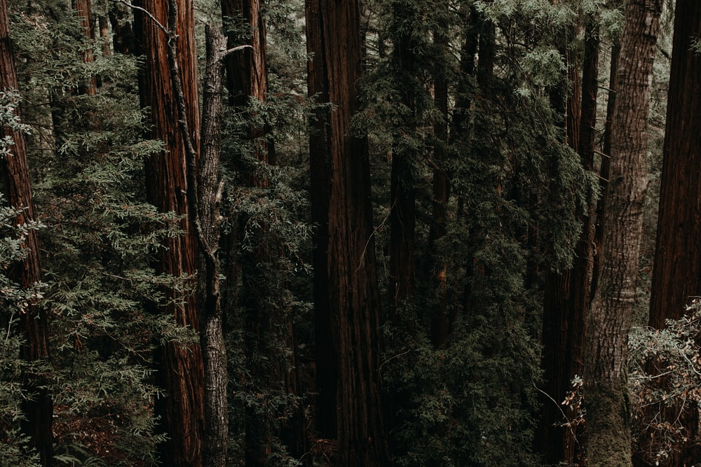 aerial photography of tall trees during daytime
