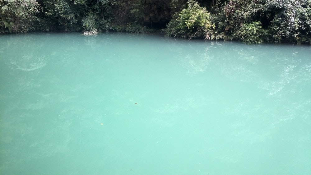 body of water beside green leafed plant