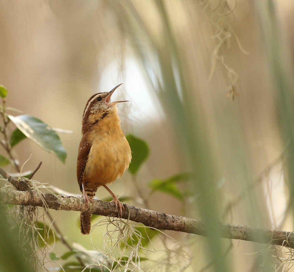 selective focus photography of yellow and brown bird standing on tree branch during daytime