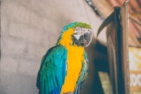 close-up photo of blue Macaw
