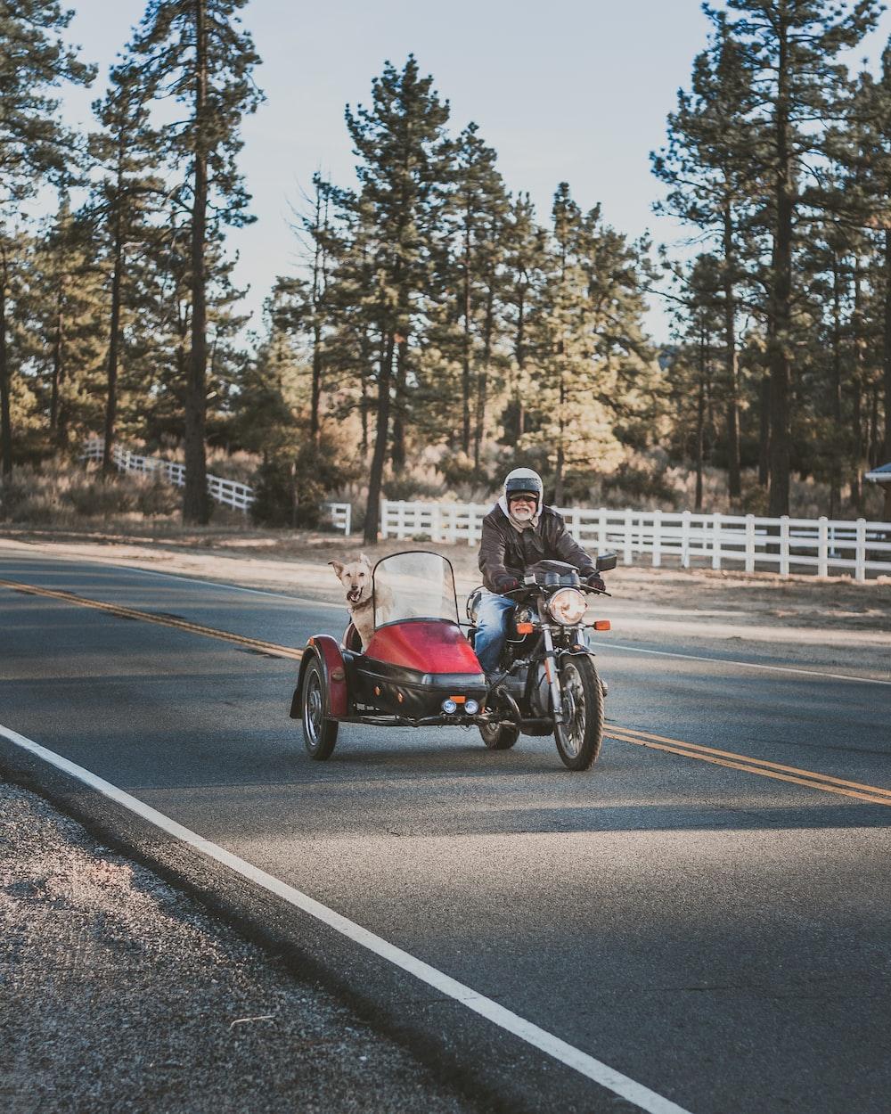 man riding motorcycle beside brown labrador dog