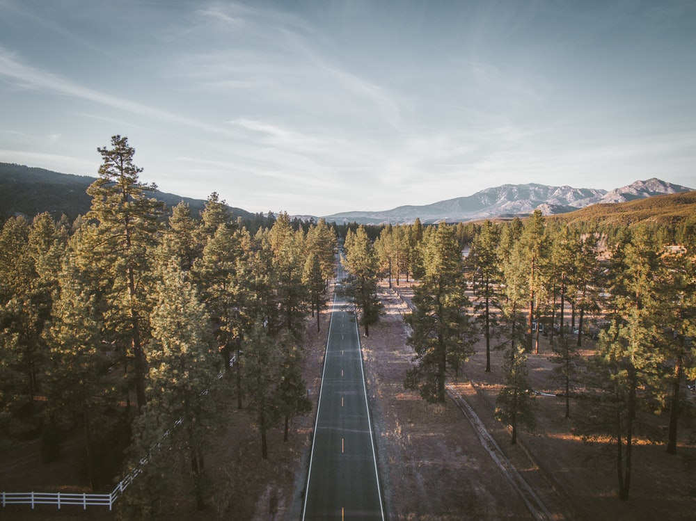 bird's-eye view of road surrounded by tress
