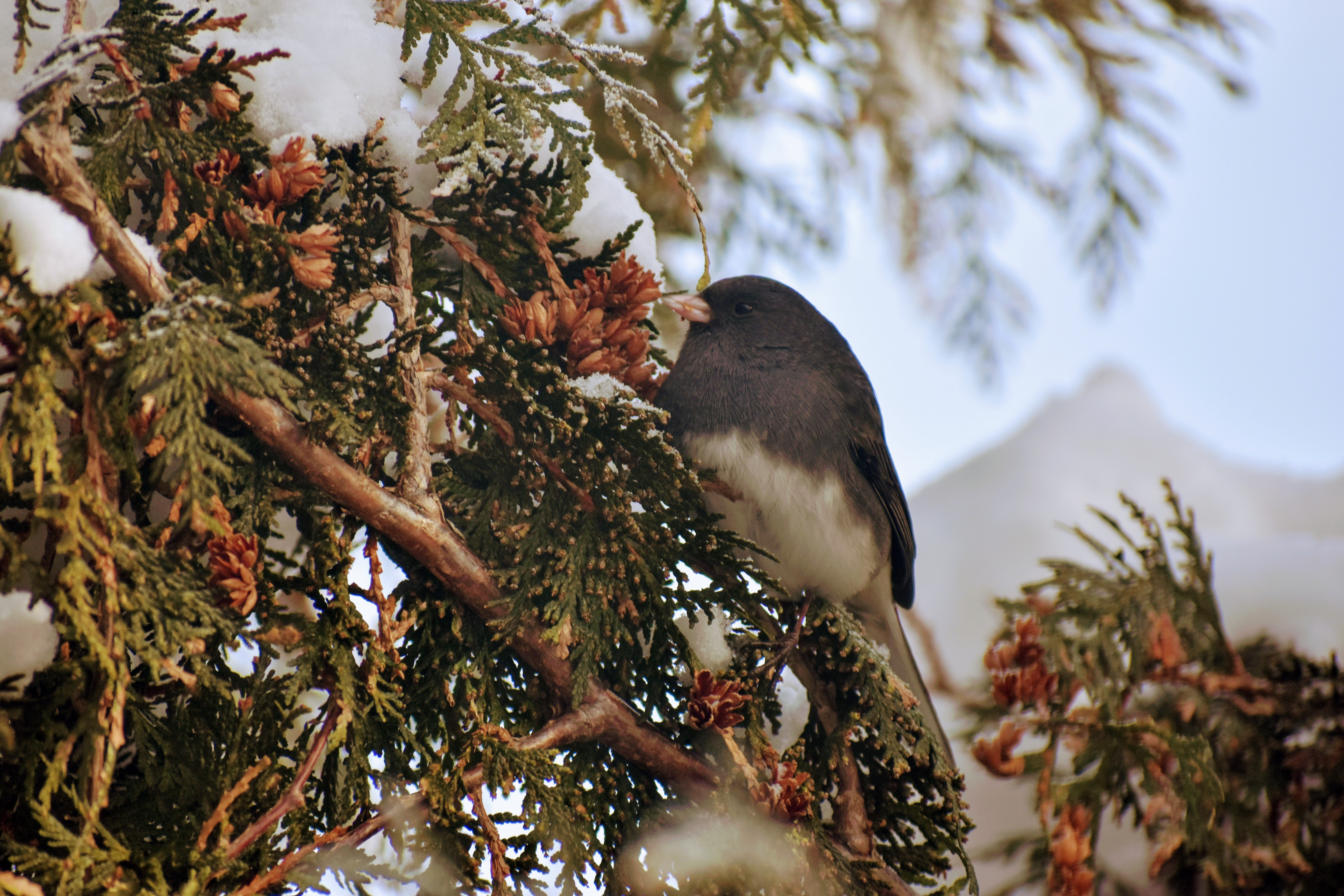 gray and white bird perched on tree branch