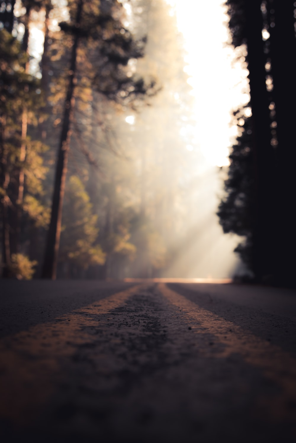 low angle view of road in mist
