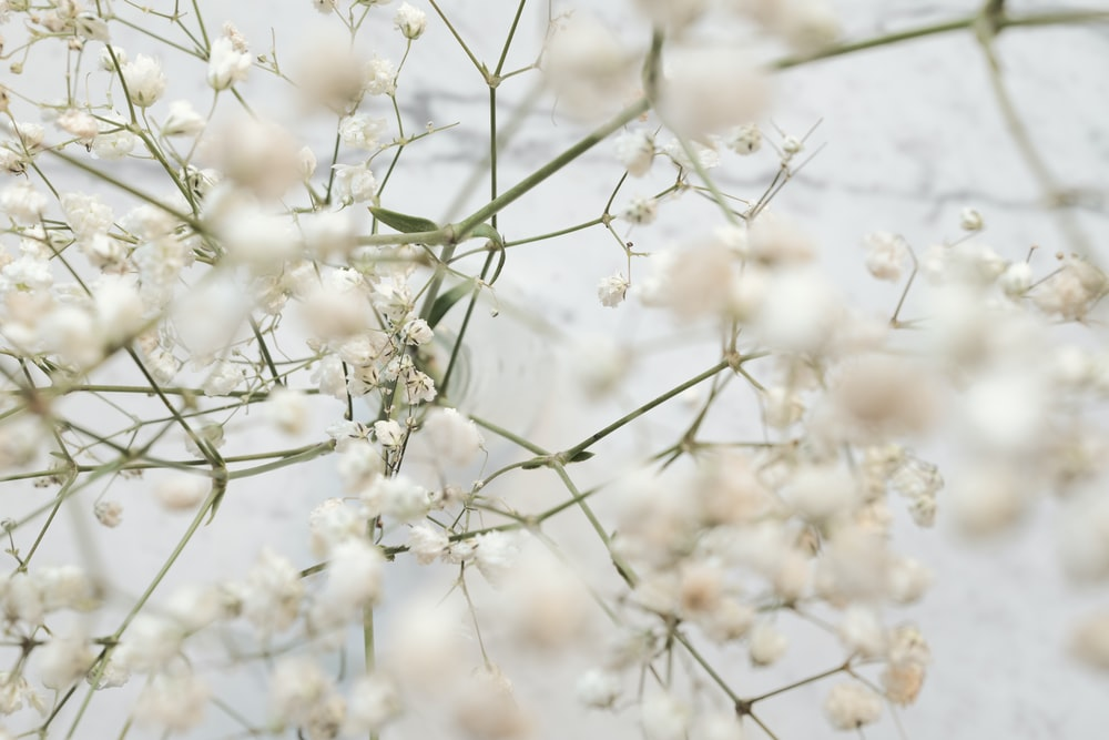 100 white flower pictures download free images on unsplash white flower pictures mightylinksfo Gallery