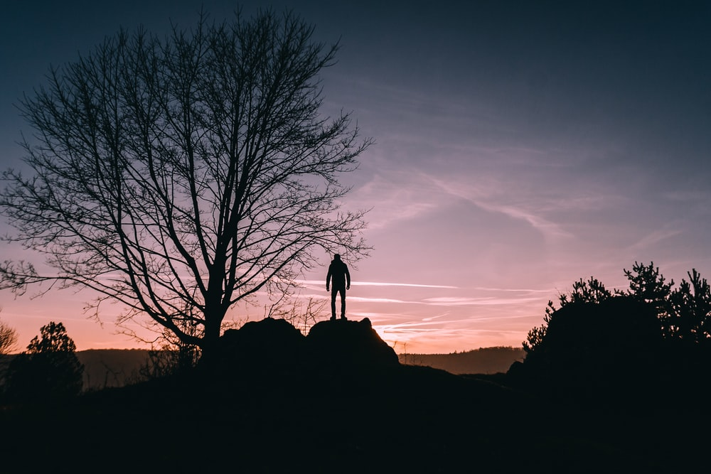 person standing on top of rock near bare tree during sunset