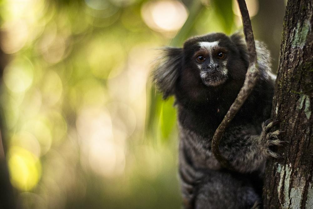 black and white animal on tree at daytime