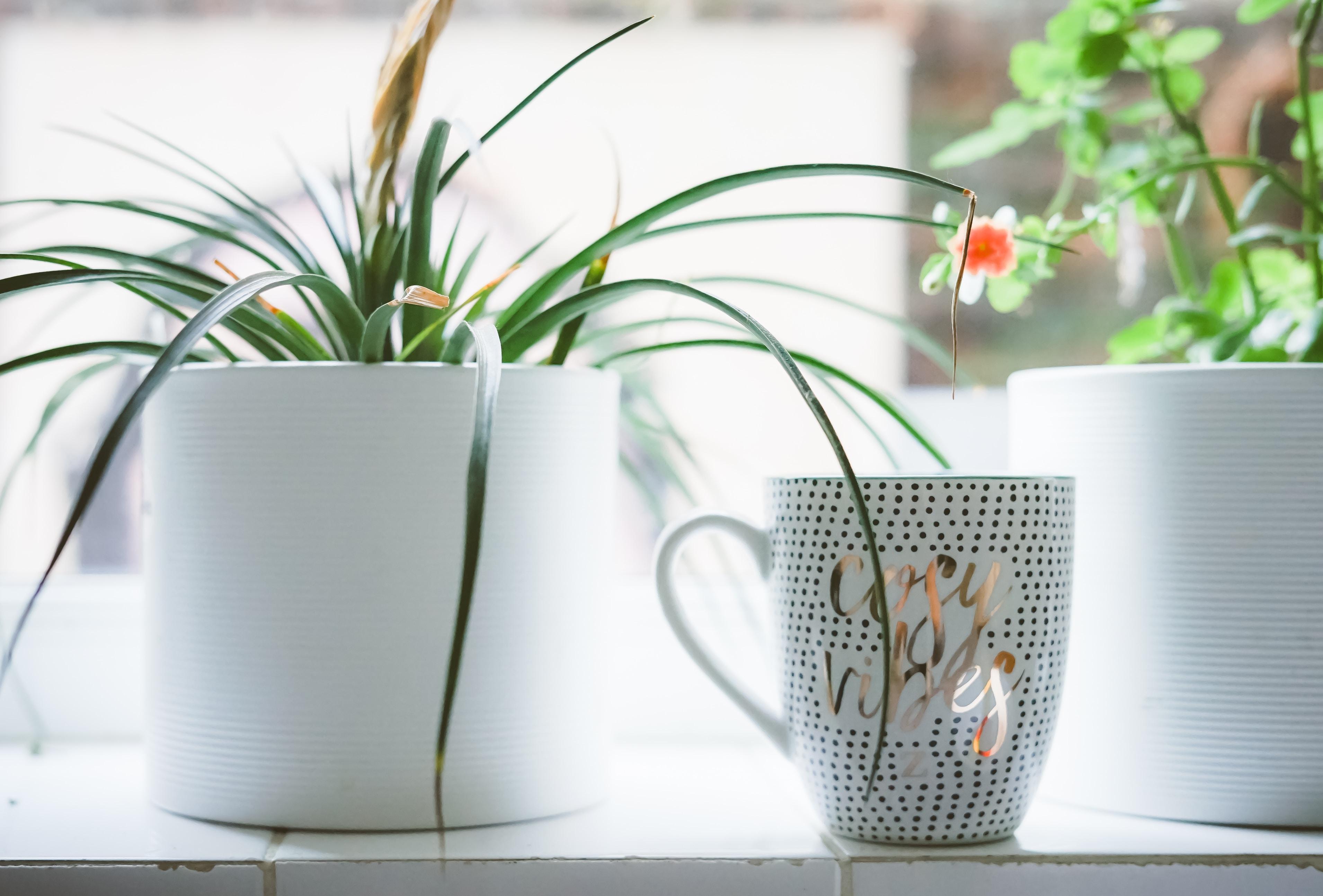 white and silver ceramic mug near flower pot