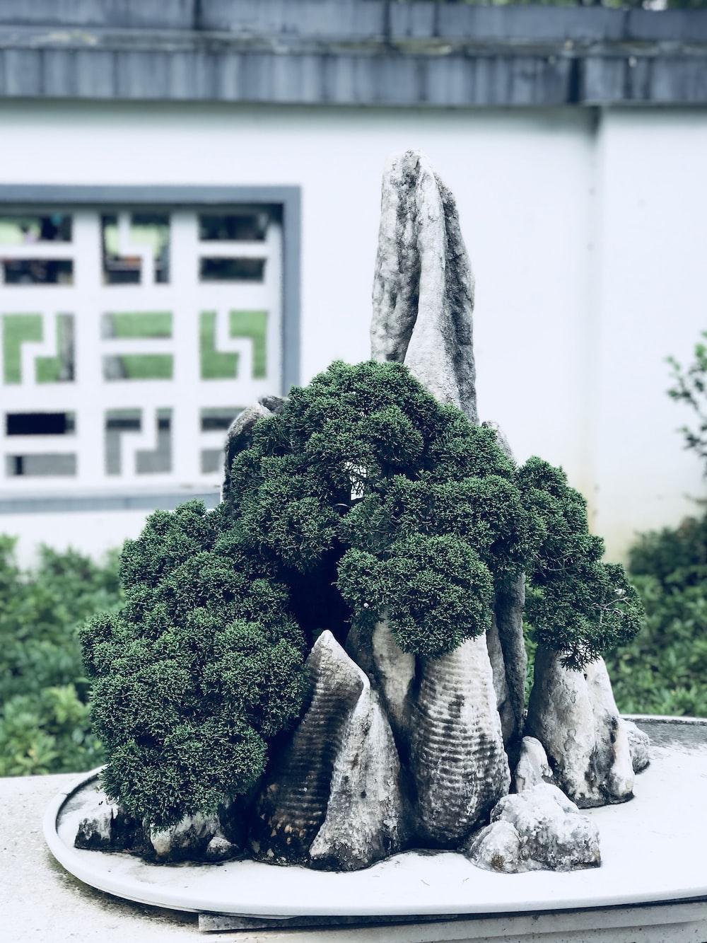 illustration of green leaf plant