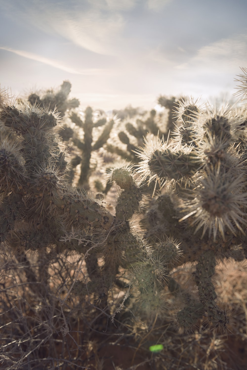 selective focus of green cacti during golden hour