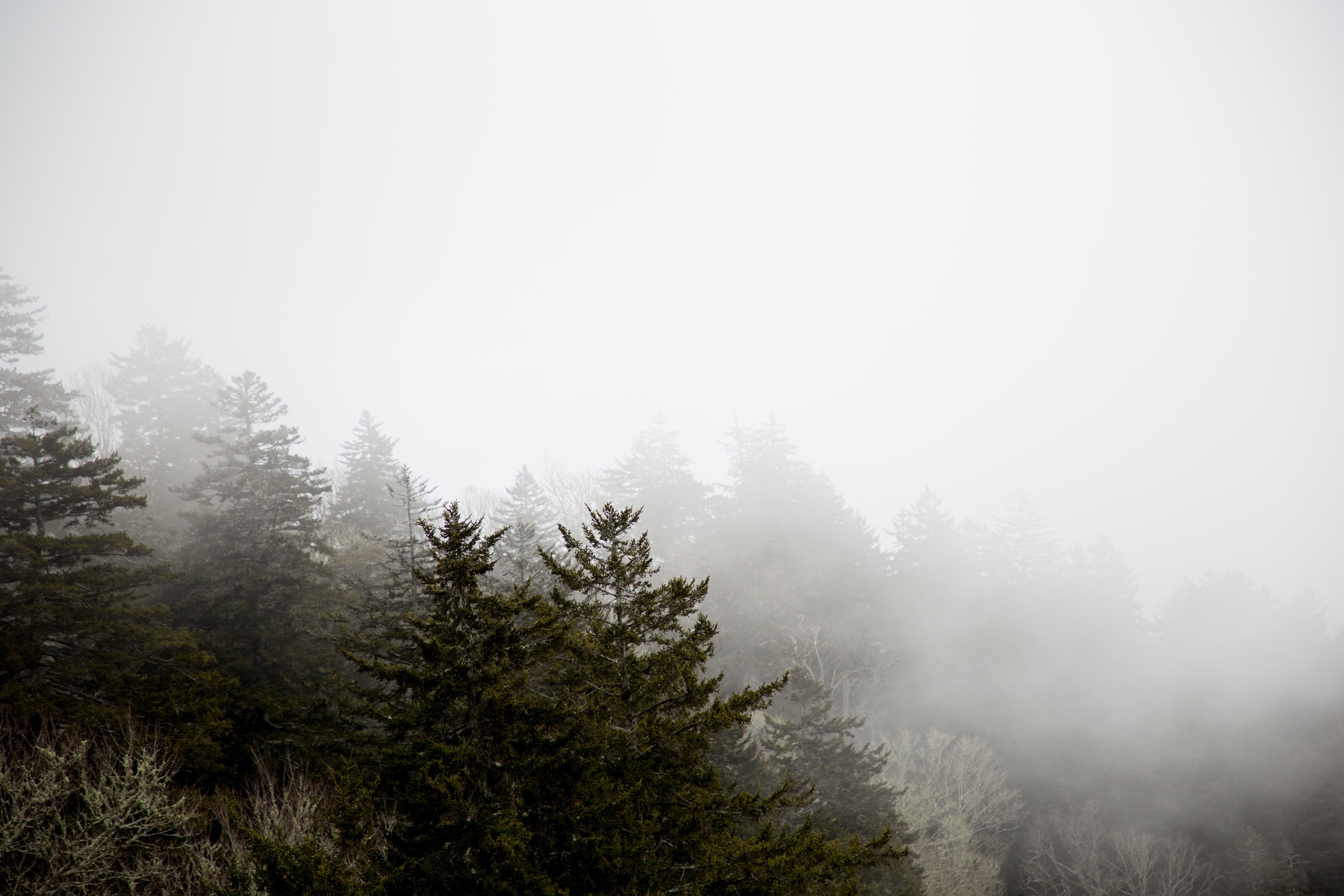green trees covering fog during daytime