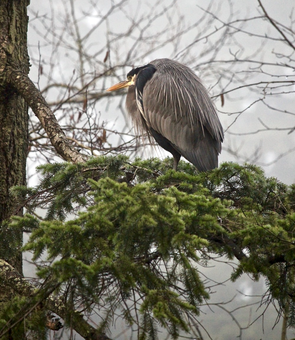 gray bird on branch