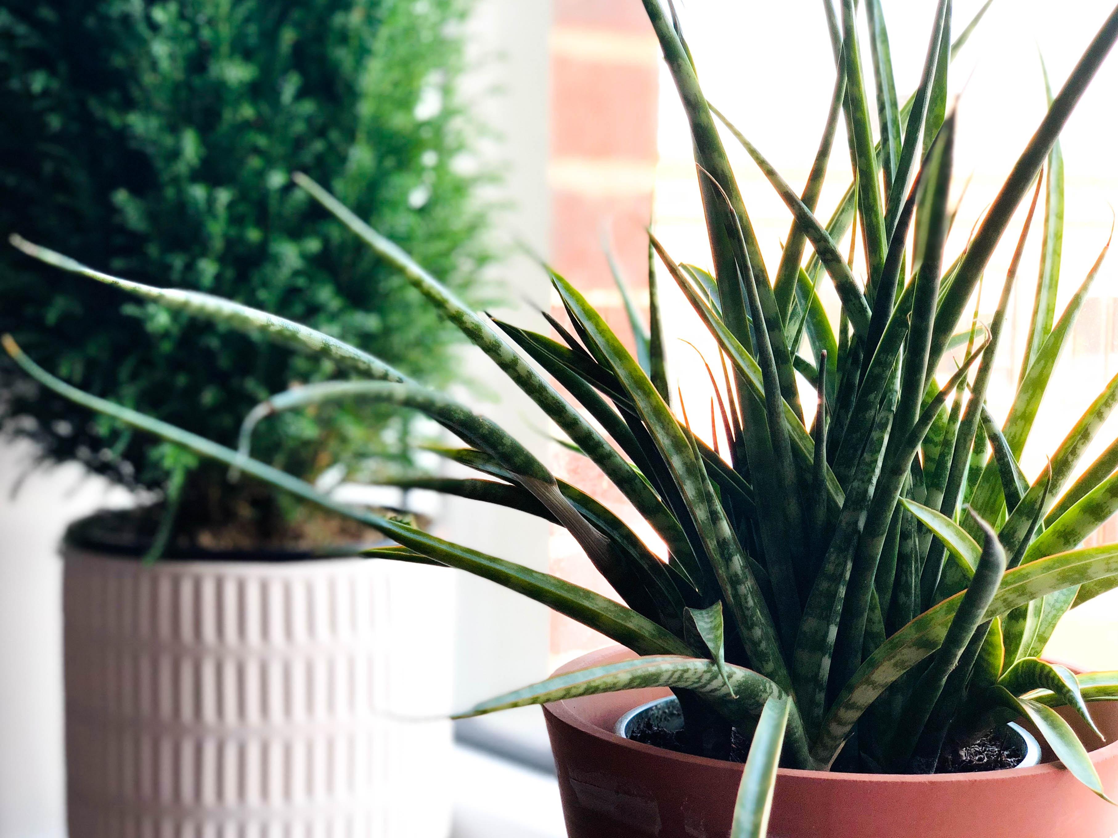 green plants on brown pot