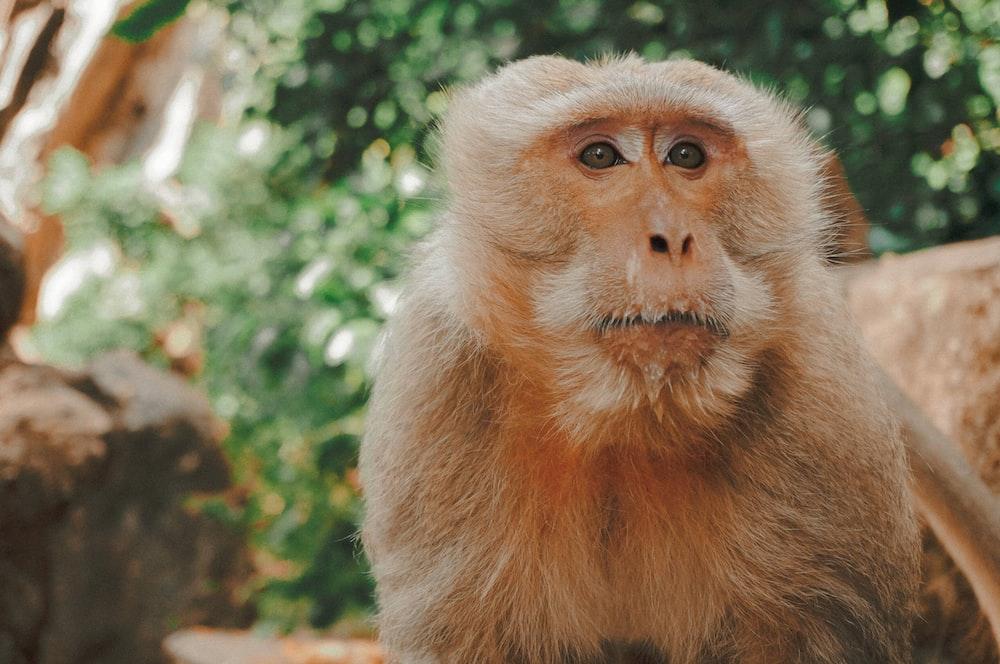 brown monkey near tree