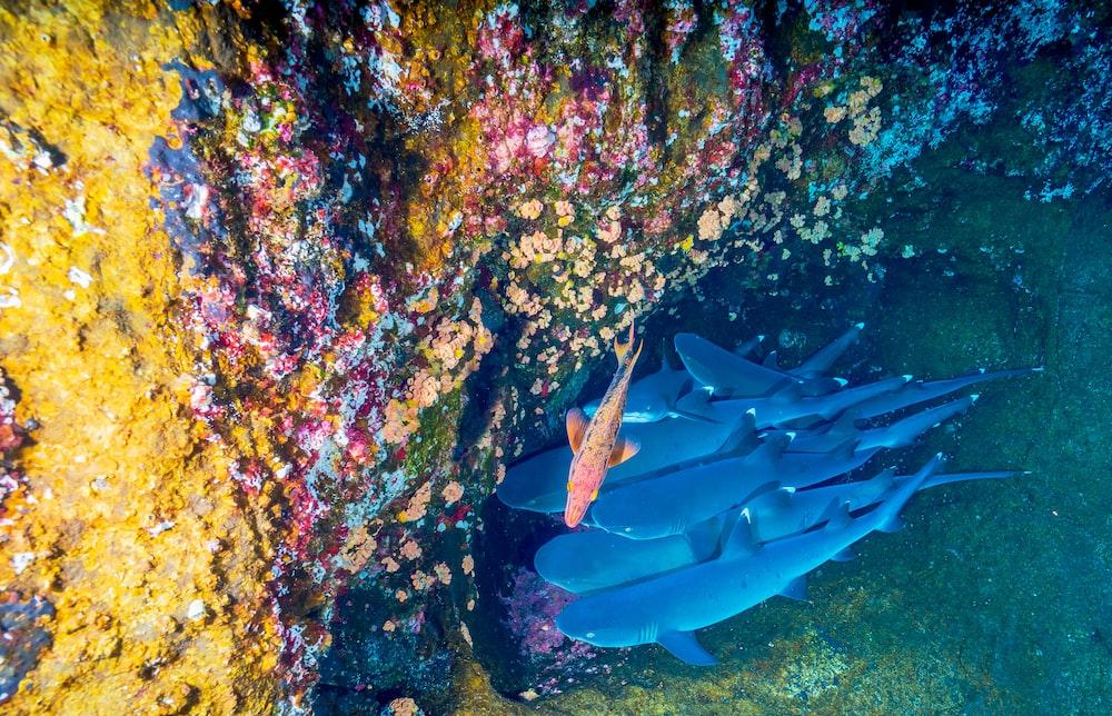 fish near coral reef underwater