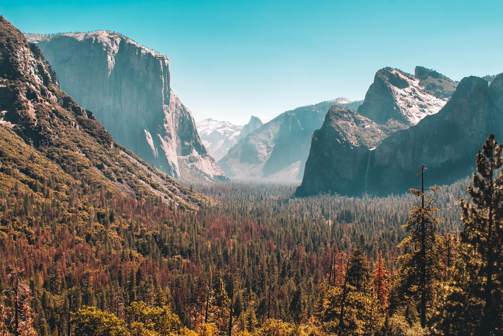 forest and mountain scenery