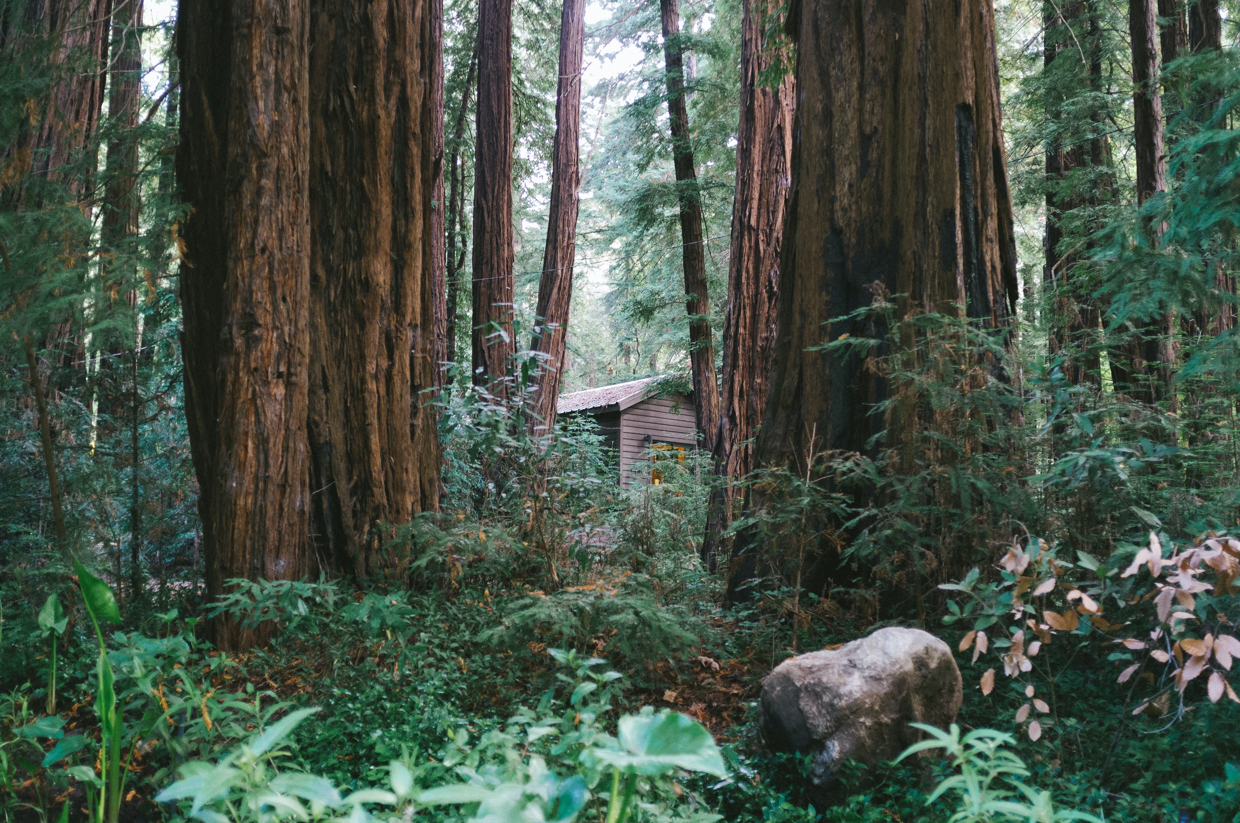 house inside forest