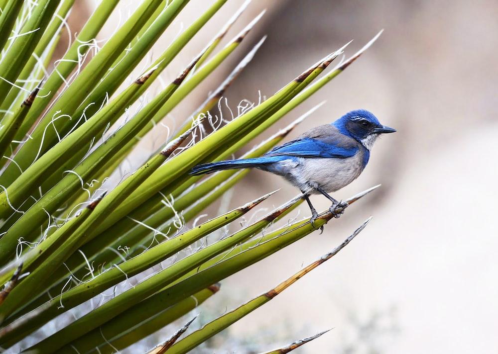 blue bird perching on grass