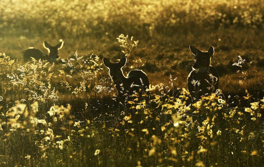 silhouette photo of deer beside yellow petaled flowers