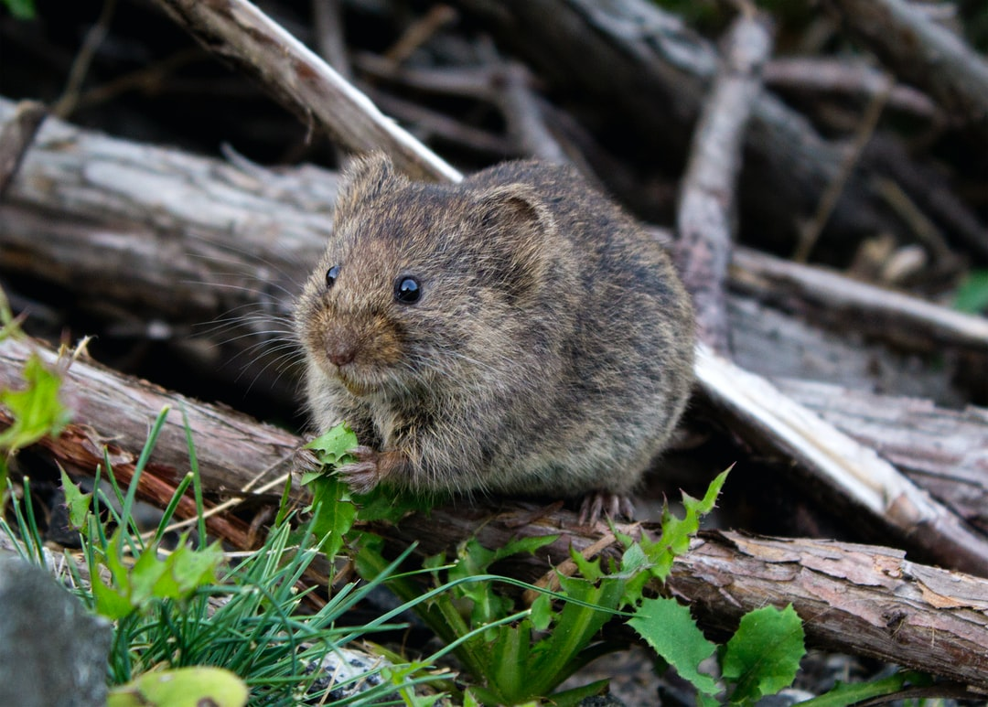 AI Decodes the Expressions of Mice