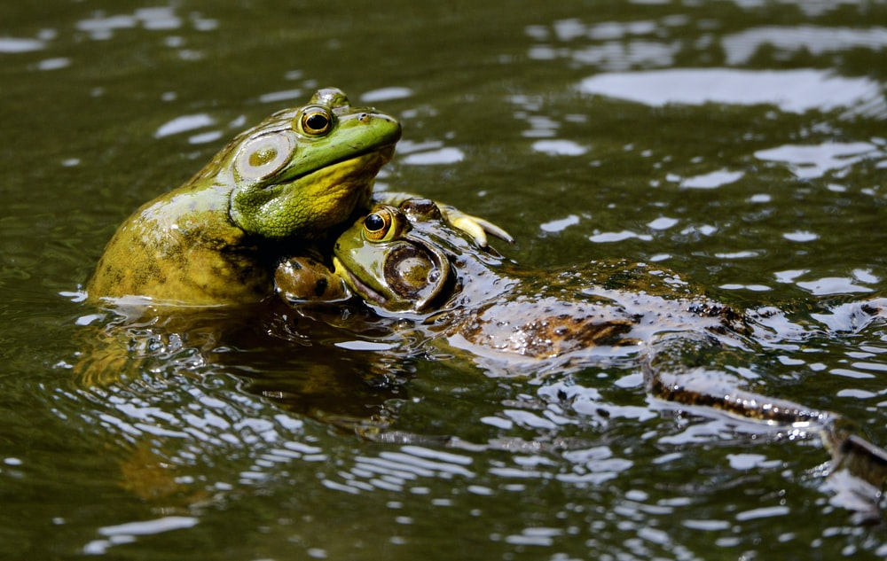 frogs on body of water