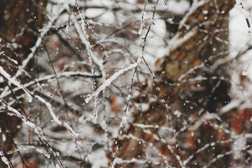 macro shot photography of snow covered tree branches