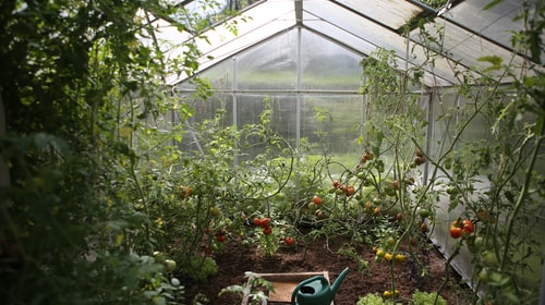 How To Take Care Of Your Plants And Keep Your Garden Healthy